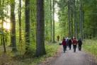 Nordic Walking im Lotzener Wald