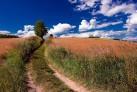 Ein Feldweg -Masuren