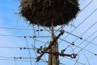 Urlaub in Polen Storche